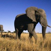 фото Ботсвана