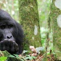 фото Руанда