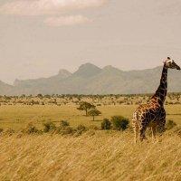 фото Уганда