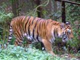 Гималайский зоопарк